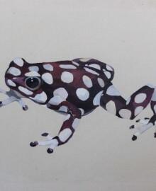 frog_braun